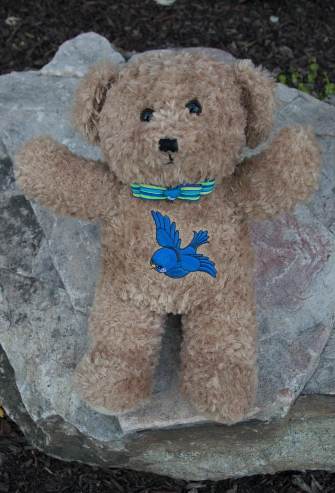 matthew-bear